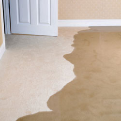 Flood Damage Carpet Reinstallation